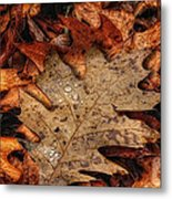Oak Leaf 1 Metal Print