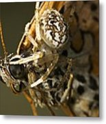 Oak Spider And Prey Metal Print by Paul Harcourt Davies