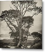 Oak Trees Metal Print