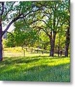 Oak Trees In The Spring Metal Print