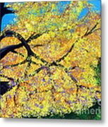 October Fall Foliage Metal Print
