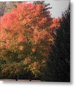 October Sunlight On Tree Tops Metal Print
