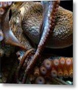 Octopus 1  Metal Print