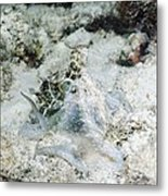 Octopus On The Seabed Metal Print by Georgette Douwma