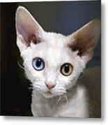 Odd-eyed Kitten Metal Print