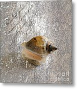 Of The Sea Metal Print by Betty LaRue