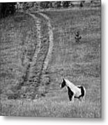 Off The Path Metal Print by Amee Cave