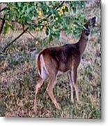 Oh Deer Me Metal Print by Myrna Migala