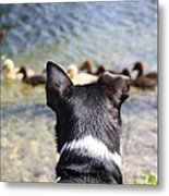 Oh He Wants To Play With Ducks Metal Print