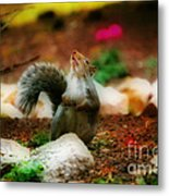 Oh I Ate To Many  Nuts Metal Print