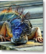 Old And Weary Metal Print