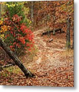 Old Country Road In Shannon County Metal Print