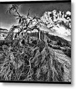 Old Desert Tree Metal Print