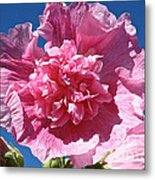 Old Fashioned Hollyhock Metal Print