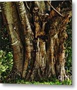 Old Fig Tree Metal Print by Kaye Menner