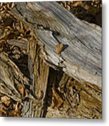 Old Tree Trunks And Leaves Decaying Metal Print