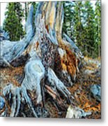Old Warrior Metal Print by Donna Blackhall