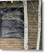Old Window And Aspen Metal Print by James Steele