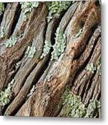 Old Wood And Lichen Metal Print