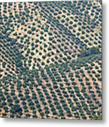 Olive Groves, Andalusia, Southern Spain. Metal Print