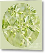 Olive O Metal Print by Linde Townsend