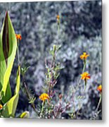 Olive Trees In The Background Metal Print