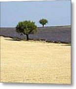 Olive Trees. Provence Metal Print