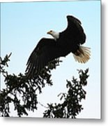 Olympic Bald Eagle Metal Print
