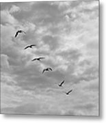 On A Mission - Black And White Metal Print