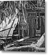 On Evergreen Platation Black And White Metal Print