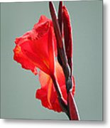 On Fire Metal Print by Suzanne Gaff
