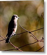 On The Arbor Metal Print