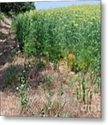 On The Path To Anise Metal Print