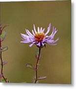 One Blossom Left Metal Print