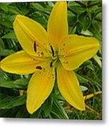 One Flower In Yellow Metal Print