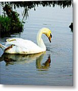 One Foot At Ease Swan Metal Print