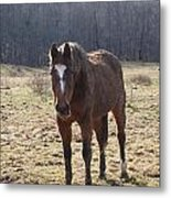 One Funny Horse Metal Print