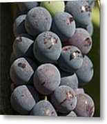 One Green Grape Stands Out In A Bunch Metal Print by Heather Perry