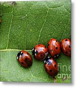 One Lady Bug Voted Off The Island Metal Print