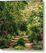 One Lonely Path Metal Print