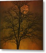 One Lonely Tree Metal Print by Tom York Images