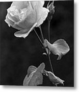 One Rose In Black And White Metal Print