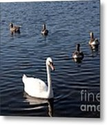 One Swan Six Ducks Metal Print