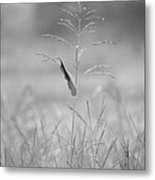One Tall Blade Of Grass On A Foggy Morn - Bw Metal Print