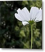 One Wildflower Metal Print