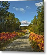 Ontario Backroad Metal Print