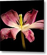 Open Lilly Metal Print