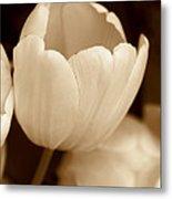 Opening Tulip Flower Sepia Monochrome Metal Print