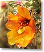 Orange And Yellow Cactus Flower Metal Print