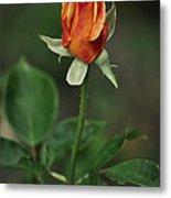 Orange And Yellow Rose Metal Print